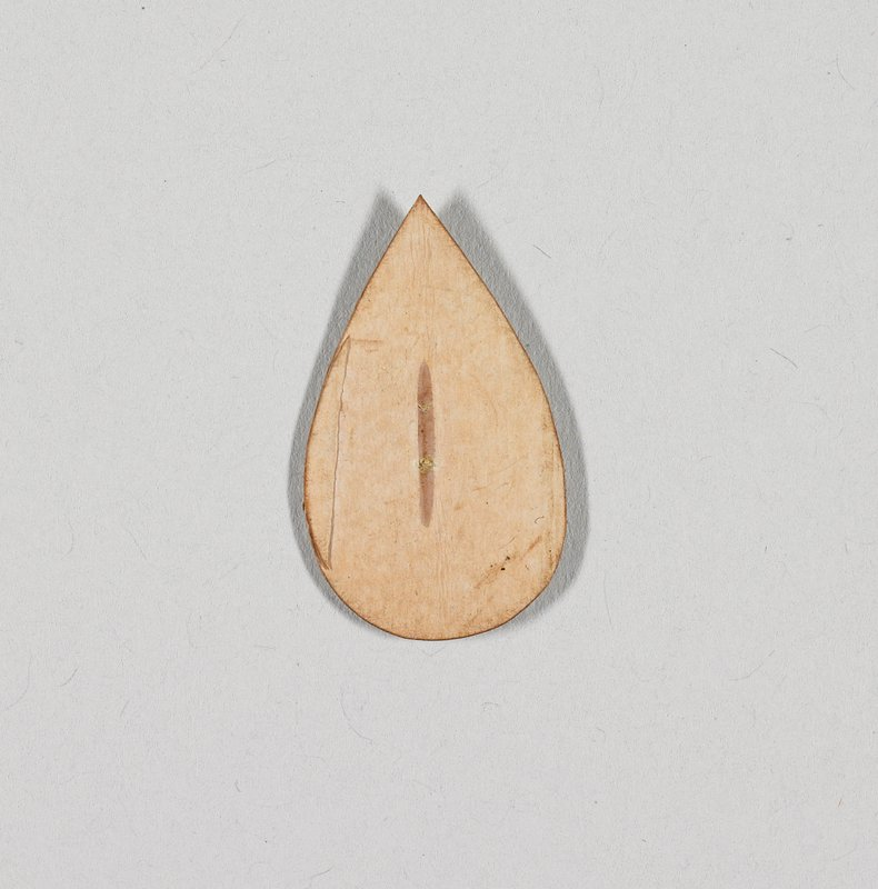 teardrop shaped; light brown on one side, medium brown on opposite side