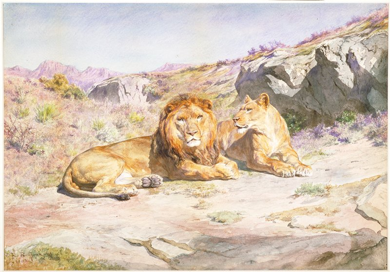 Lion and lioness in landscape