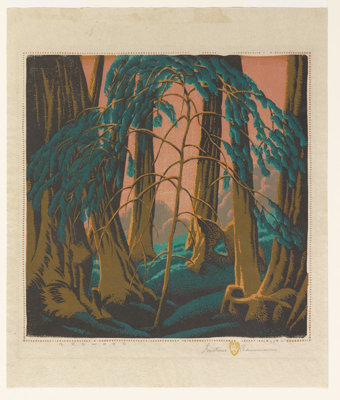tree trunks growing in mossy ground; sapling w/leafy branches at center; burnt orange sky between and behind tree trunks