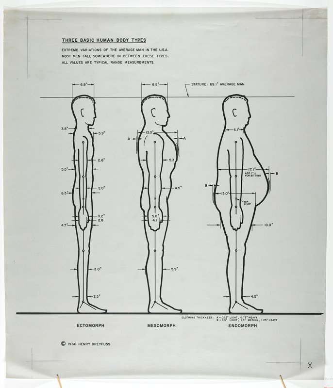 Three Basic Human Body Types Profile Henry Dreyfuss Draftsman