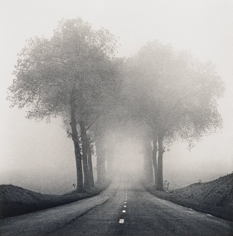 two lines of trees on either side of a road with a glowing dotted line at center; fog/mist
