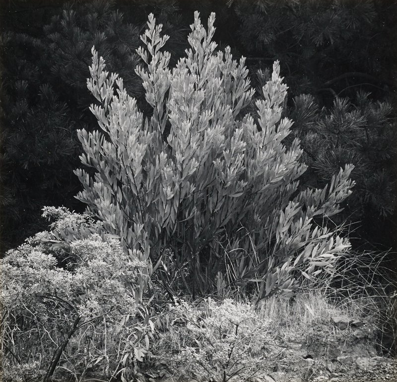 shrub and foliage