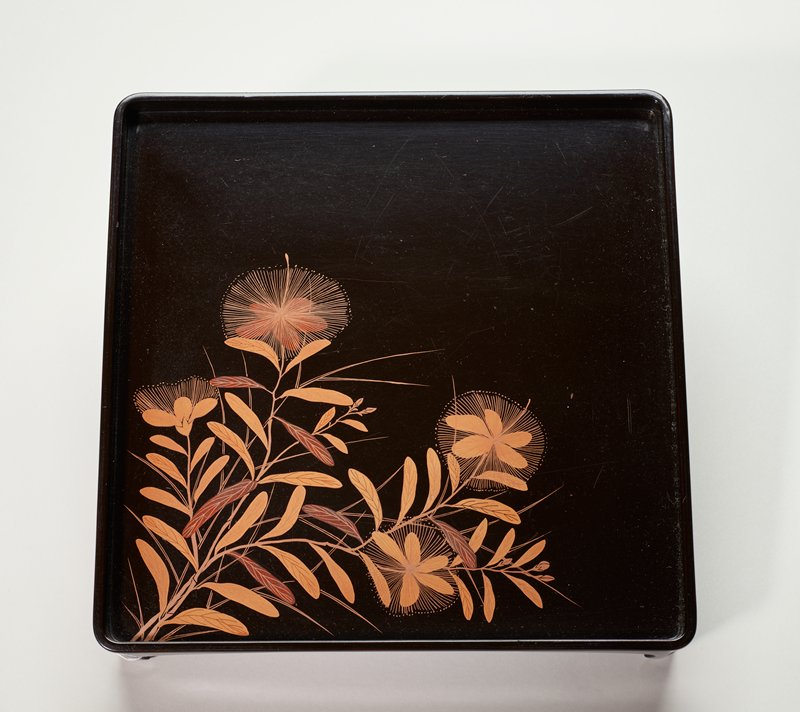 black lacquer tray; plant with oblong leaves and delicate flowers with starburst petals lower corner