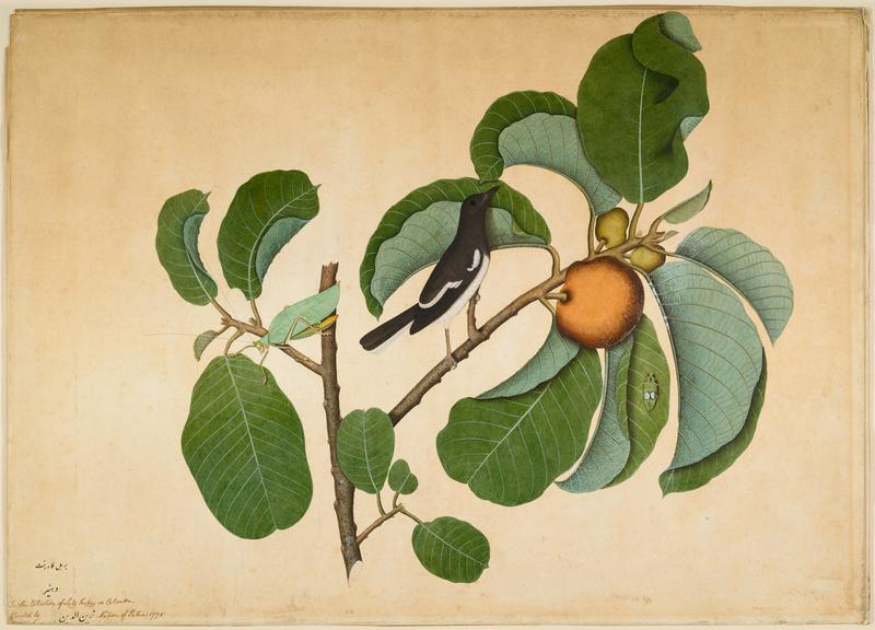 image of a black and white bird perched on a branch with orange fruit and two insects; brown frame with gold accent
