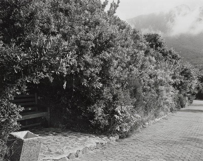 black and white photograph of a large hedge with bench inside a cut-away section of hedge; brick path along right side