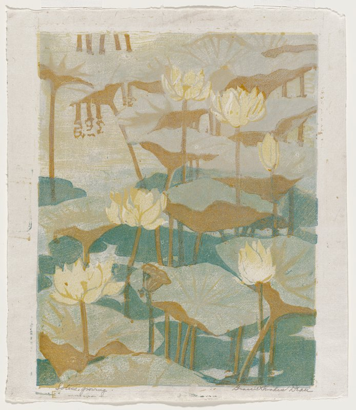yellow lotus flowers, brown seed pods and green and brown lotus leaves on green water