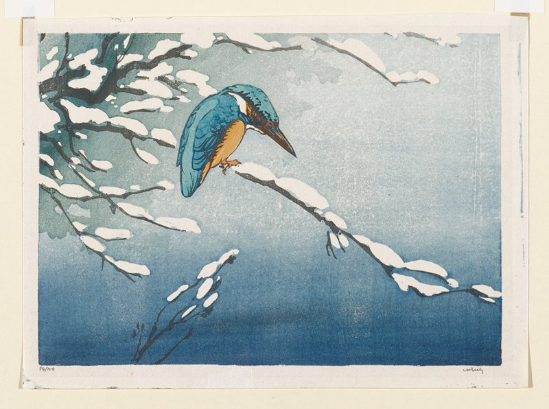 small blue bird with orange breast and white area on neck, perched on snowy branch; blue ground
