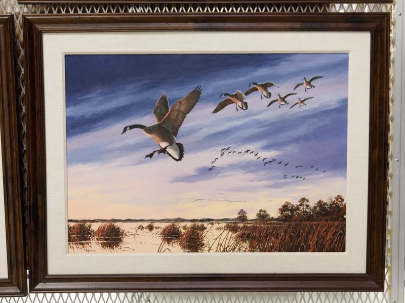 Animal. Bird. Fowl. Canada geese landing in a marsh against a blue sky.