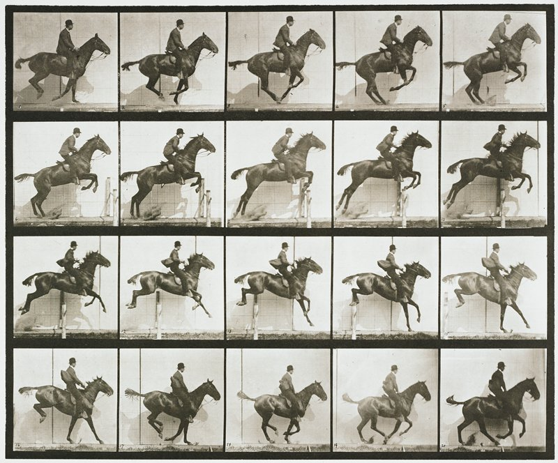 Jumping a hurdle, saddle, bay horse. From a portfolio of 83 collotypes, 1887, by Edweard Muybridge; part of 781 plates published under the auspices of the University of Pennsylvania