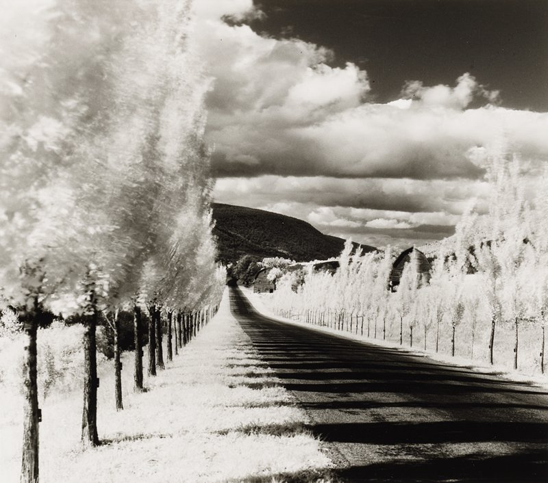 dark road lined with small poplar trees with light-colored leaves; tree covered hill in background; barns behind trees at right; clouds in sky