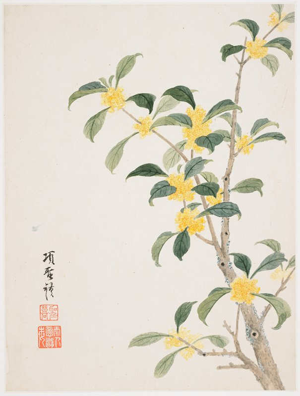 ball-shaped clusters of tiny yellow flowers on a grey branch with dark green leaves; inscription and 2 seals in LLC