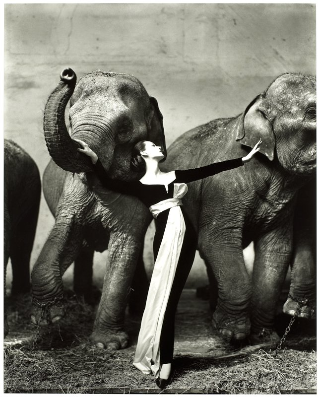 woman with her hair in a bun, wearing a black dress with a white sash, standing between 2 elephants
