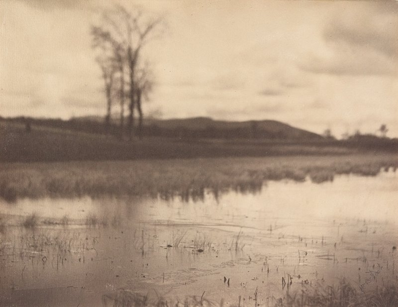 grasses poking through the surface of a body of water; bare tree in background at L; hills in background at horizon