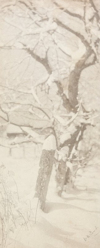 2 snow-covered fenceposts and bare snow-covered tree
