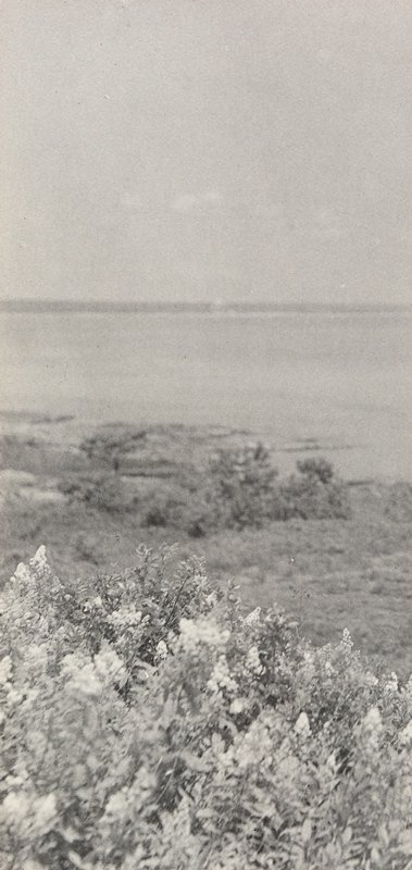 flowering grasses in foreground; coast in distance with large body of water in background