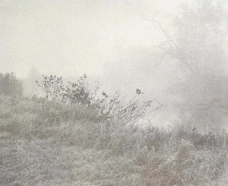grasses and bushes in foreground; trees blurred by fog in background