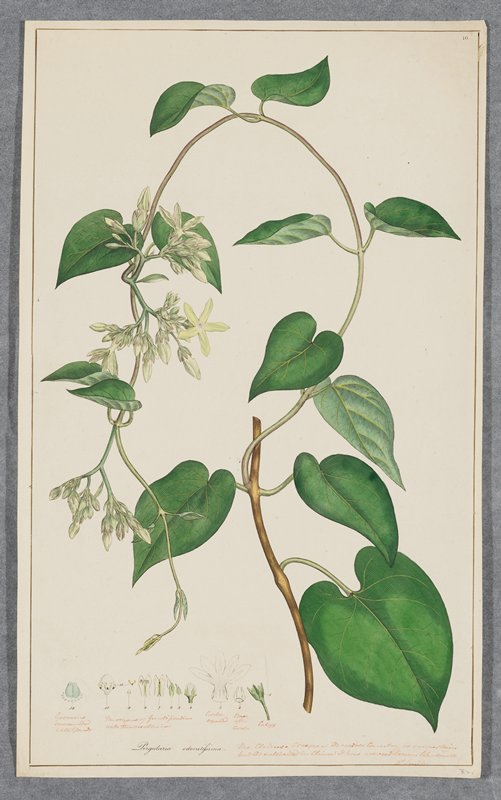Plate 16, one of 18 hand-colored engravings of flowering plants by Sowerby
