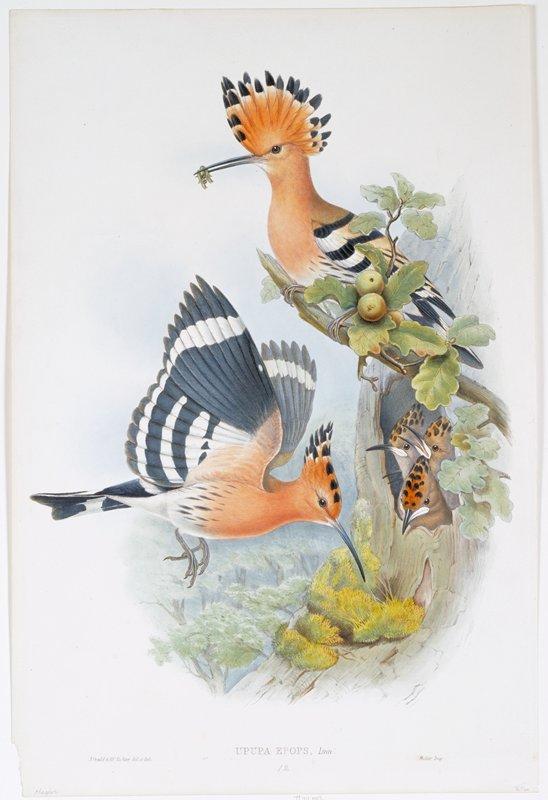 birds (hummingbirds)