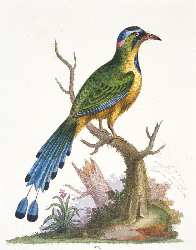 birds; plate 328