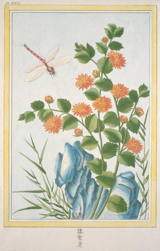 Plate XXXI